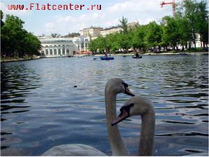 Лебеди на Чистых Прудах.Москва