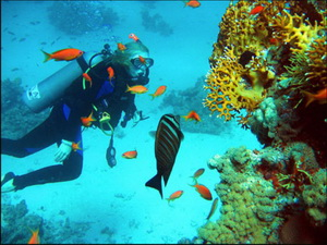 Подводное плаванье в Египте