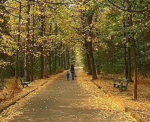 Фото парка на районе у м.Багратионовская