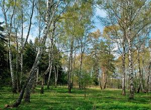 Битцевский Парк в Москве